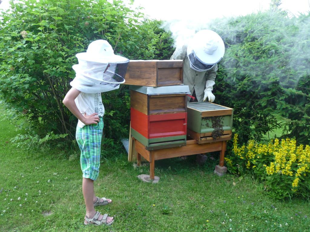 Bienen in Zanderbeute am Wald